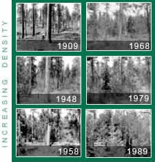 "[pictures rearranged for display purposes] Series of photo shots included in the US Forest Services' ""Forests with a Future Brochure"" brochure"