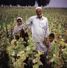 An Afghani farmer stands in his opium poppy fields.