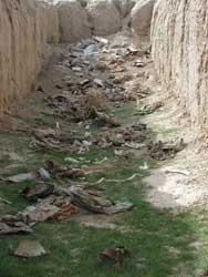 A mass grave dug up near Mazar-i-Sharif, Afghanistan.