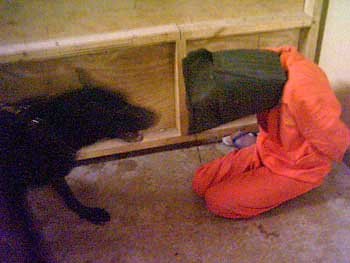 A dog harassing an Abu Ghraib detainee on December 30, 2003.