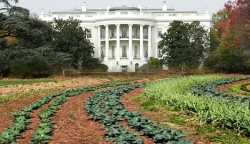 A portion of the White House vegetable garden.
